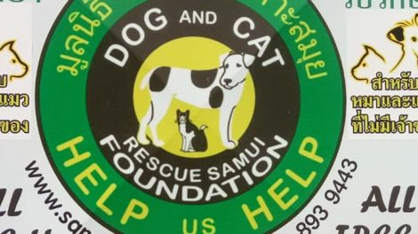 Dog And Cat Rescue Samui Foundation