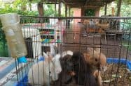 Samui Sheep Farm & Salad Bar